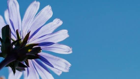 Blomma och blå himmel